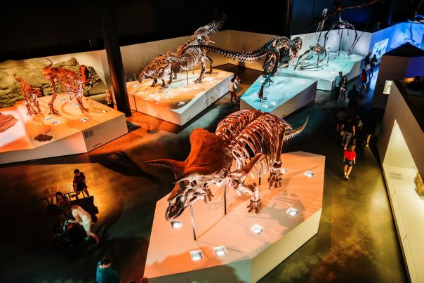 Dinosaur Exhibit at The Museum of Natural Science