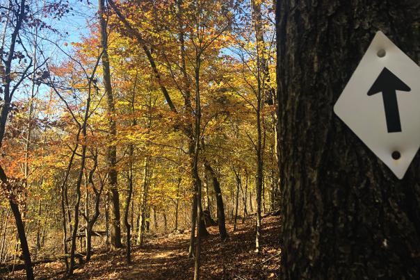 hiking trail with fall foliage