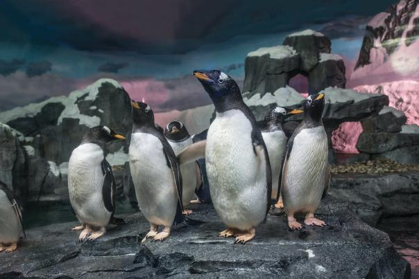 World of Wildlife Penguins