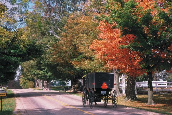 Amish Buggy Fall