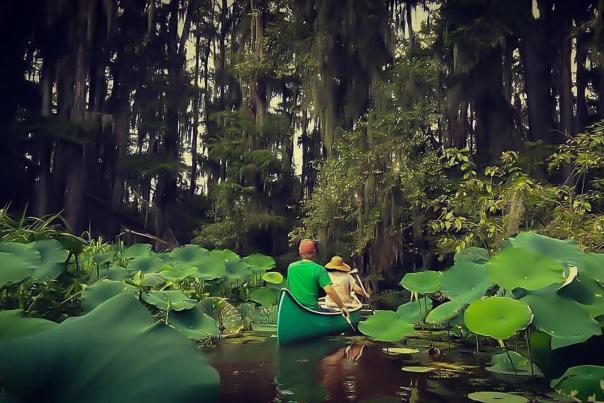 Kayaking-Caddo Lake-Piney Woods-H