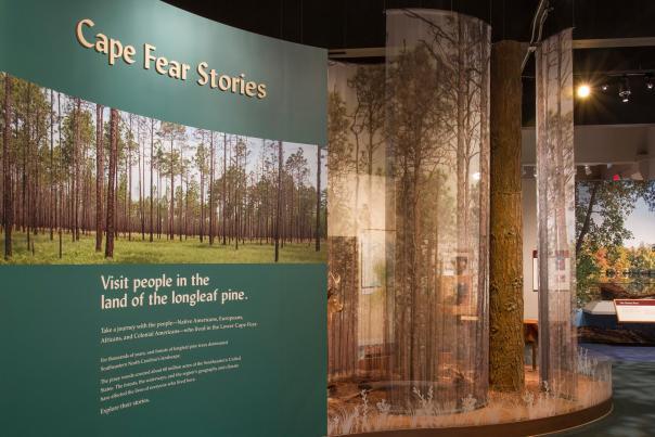 Cape Fear Museum Long Leaf Pine exhibit