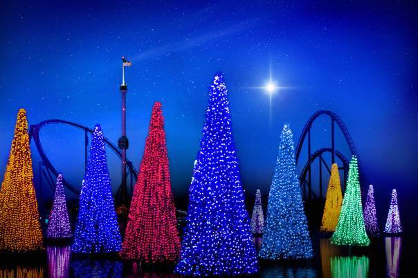 Sea of Trees illuminates the park at SeaWorld Orlando