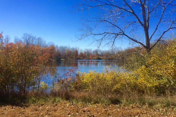 Bowman Lake at Fox Island in the Fall