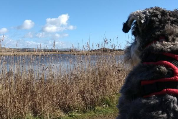 Dylan the dog at Lodmoor Country Park in Weymouth, Dorset