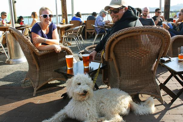 Dog at HMB Brewing Co.