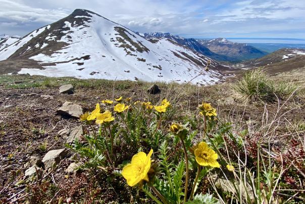 Mount Gordon Lyon View