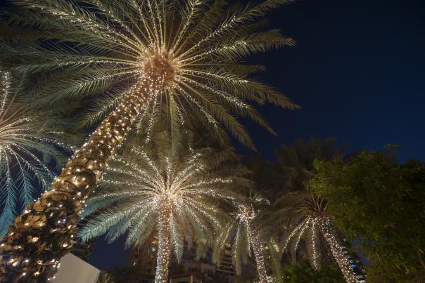 iStock Palm Tree Christmas Lights