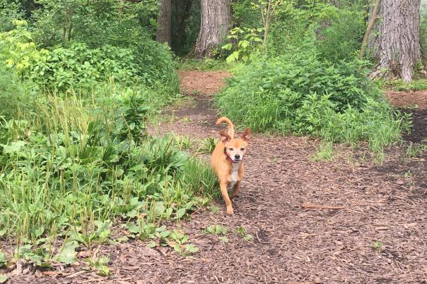 A dog running on a trail at Warner Park