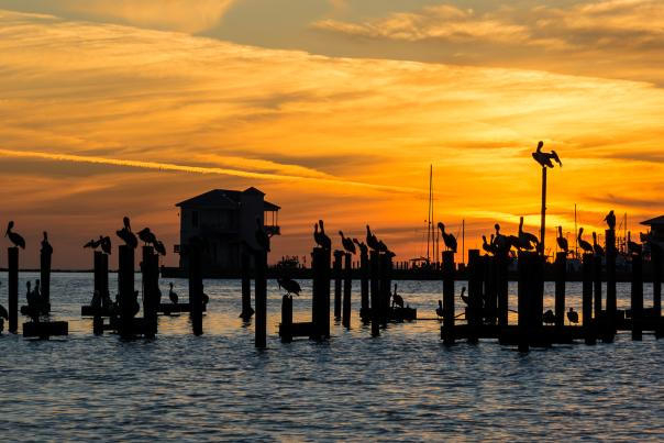 David Hilton pier sunset