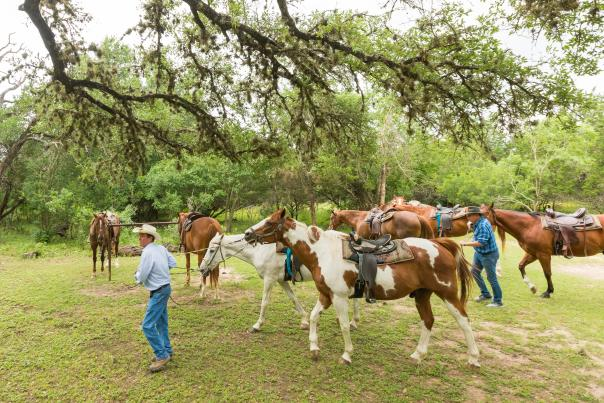 Mayan Dude Ranch-Bandera-Horses-H