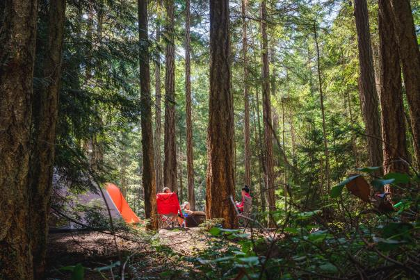 Camping-in-the-redwoods-forest