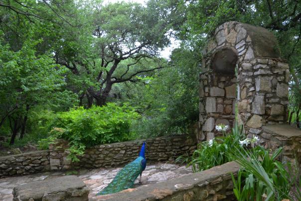 Mayfield Park & Nature Preserve. Credit Tricia Zeigler.