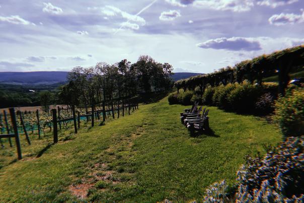 Hillsborough View