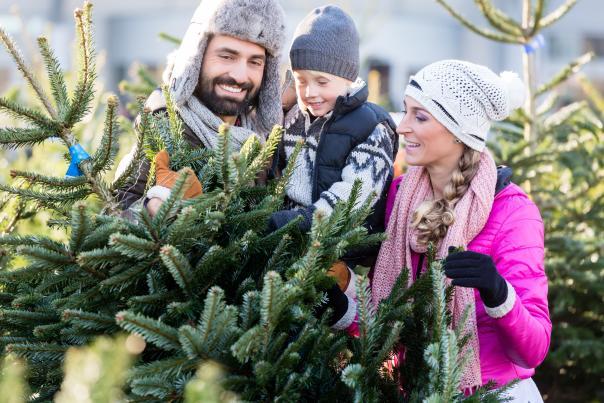 Choose and Cut Christmas Tree Farm