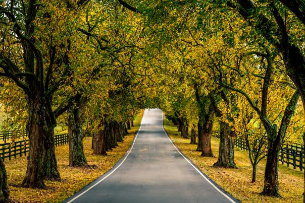 Scenic Country Road Near Lexington in Fall