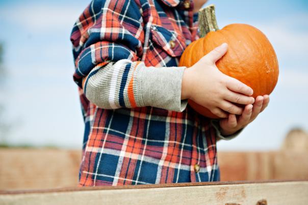 Fall Pumpkin Patch. Credit Barton Hill Farms.