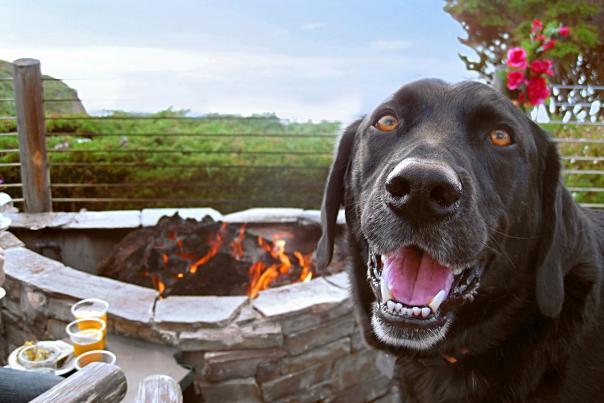 Dog at Moss Beach Distillery