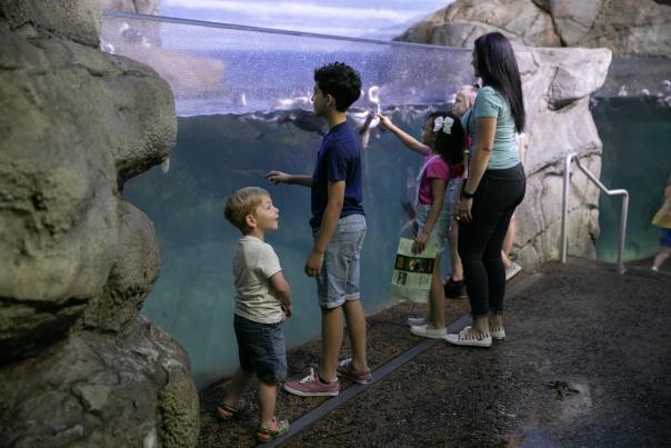 Watching the penguin exhibit at John Ball Zoo.