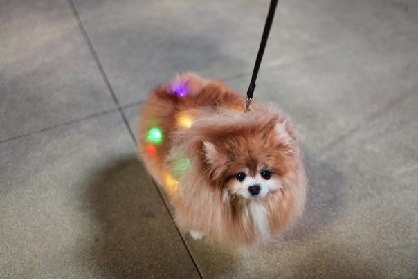 Christkindl dog