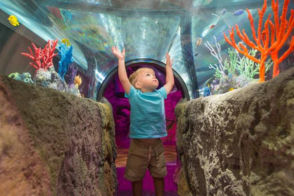 SEA LIFE Orlando Aquarium little boy with hands raised