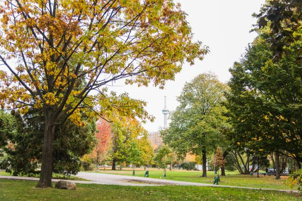 Trinity Bellwoods Park in autumn, with a view of the CN Tower