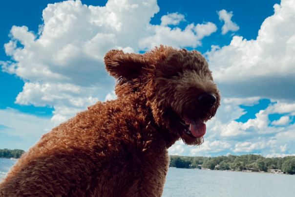 Pet friendly lake sinclair
