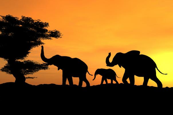 A silhouetted elephant family at sunset.