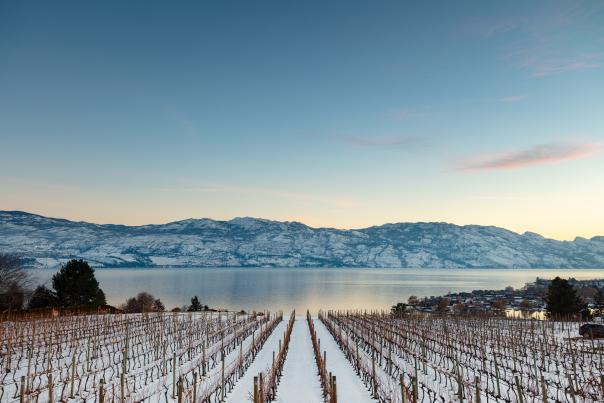 Quails' Gate Winery-Snowy Winter (12)