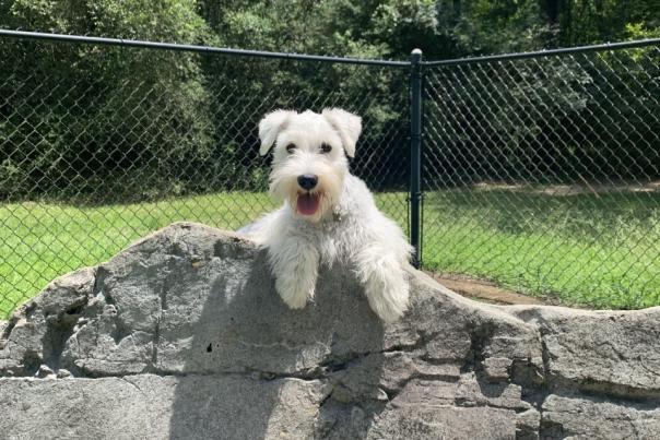 Harper's Landing Dog Park