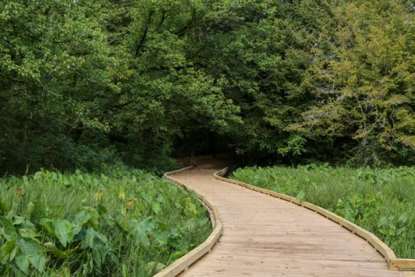 State Botanical Garden ADA Boardwalk