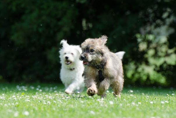 doggy_dash_for_blog