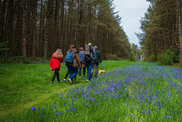 Family Walking in a Bluebell Wood in Dorset