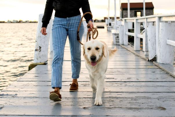 Person walking a dog on Bowen's Wharf in Newport RI