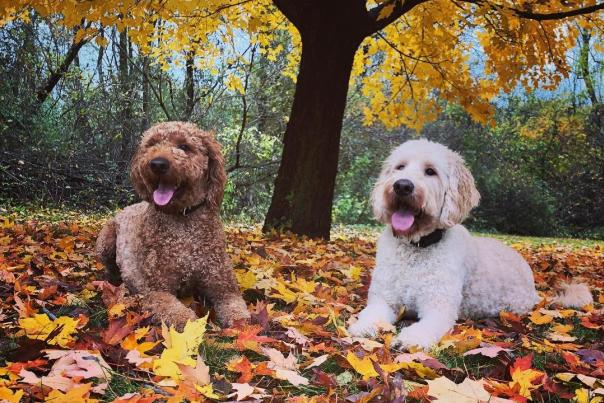 Two Dogs in Monroe County Park