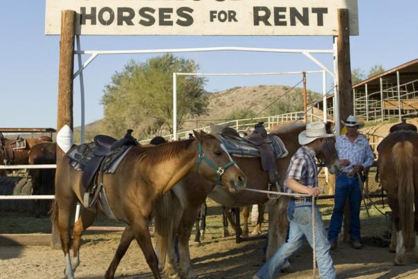 ponderosa stables