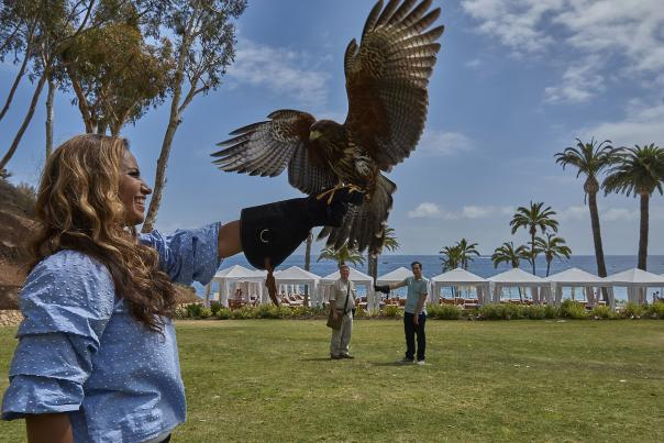 Catalina Falconry Experience