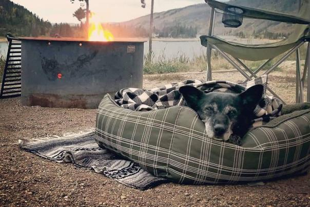Camping by a lake with a dog and fire