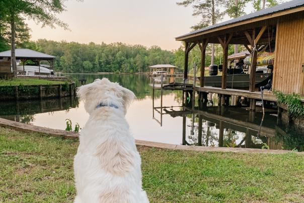 Lake Sinclair dog