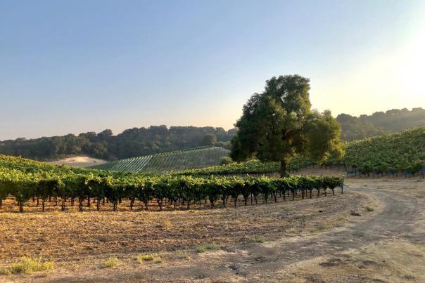 Booker Vineyards