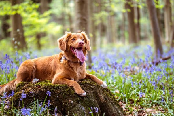 Woodsy dog