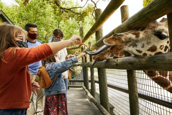 Family Feeding Giraffes at Dickerson Park Zoo