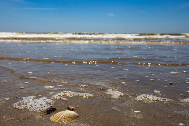 Beach-Galveston-Seashell-H