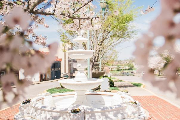 fountain framed by cherry blossoms