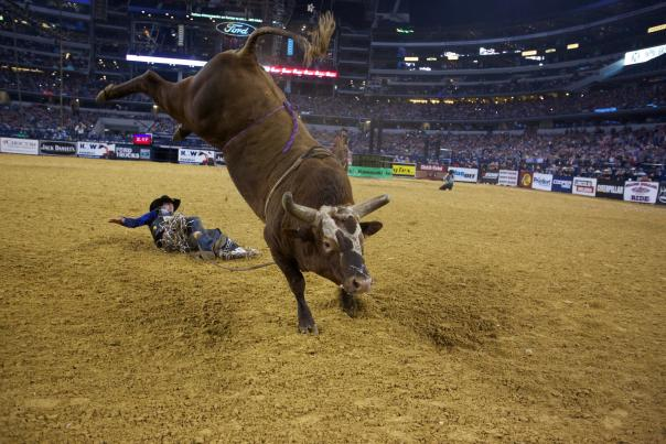 Professional Bull Rider Rodeo