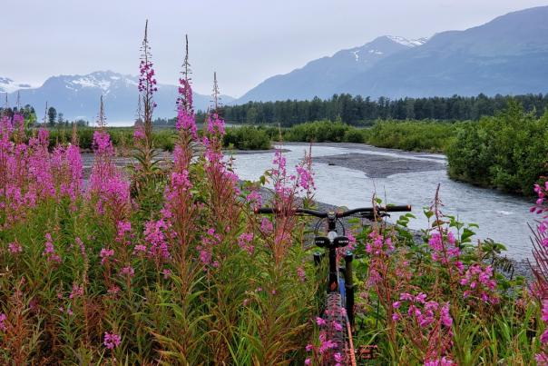 a bicycle parked amongst fireweed