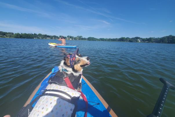 Puppy dog on a paddleboard with Epic Paddle Adventures