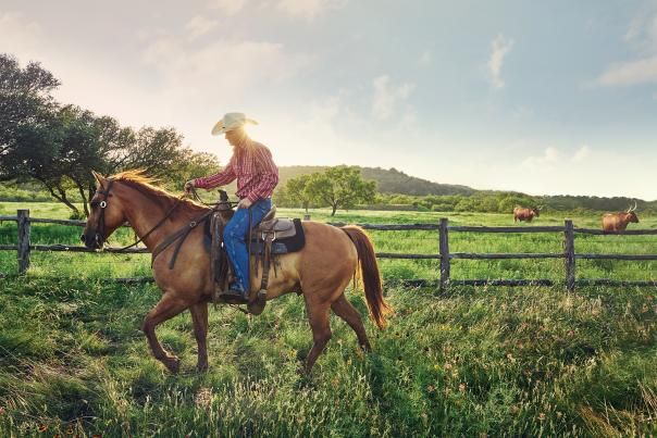 Wildcatter Ranch-Dallas-Horse-H