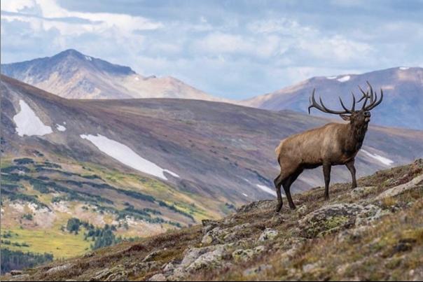 Elk Rut Blog Roundup