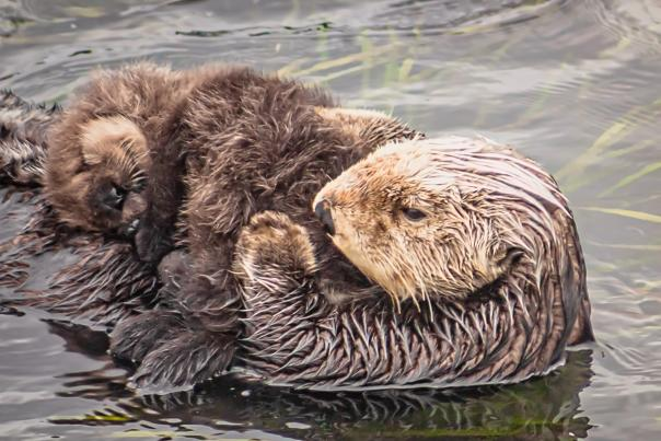 Otter with Pup